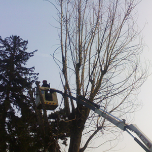 Tree Climbing - Potature